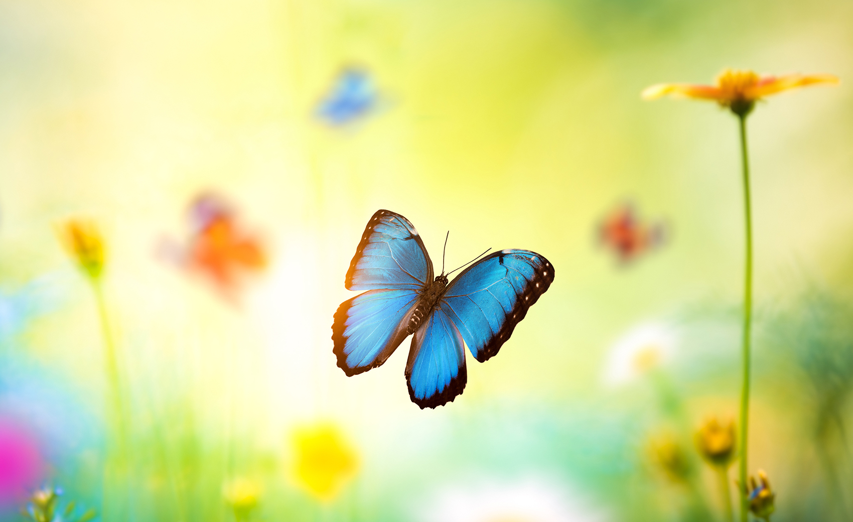 The Butterfly Principle | Roland Berger